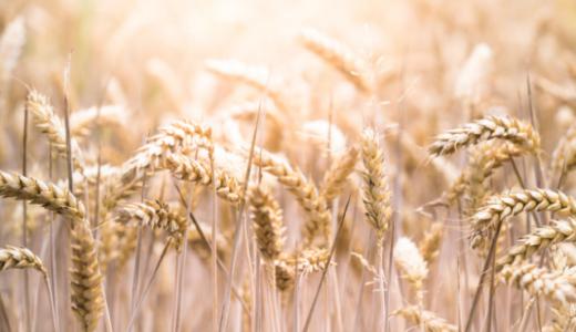 そのニキビ、原因は小麦かも!?小麦アレルギーだったうさたにパイセンの話