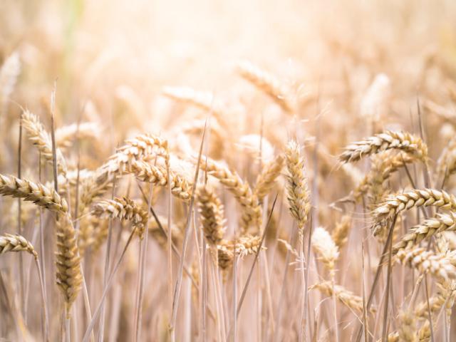 アレルギー 肌荒れ 小麦